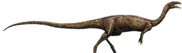 В Австралии впервые нашли останки элафрозавра