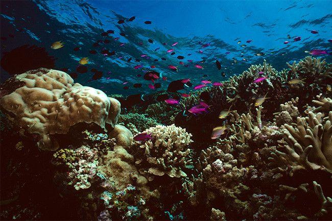 Ученые: с 1995 года Большой барьерный риф потерял половину кораллов