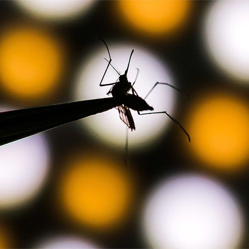 В Китае ученые придумали, как уничтожать комаров с помощью радиации и бактерий