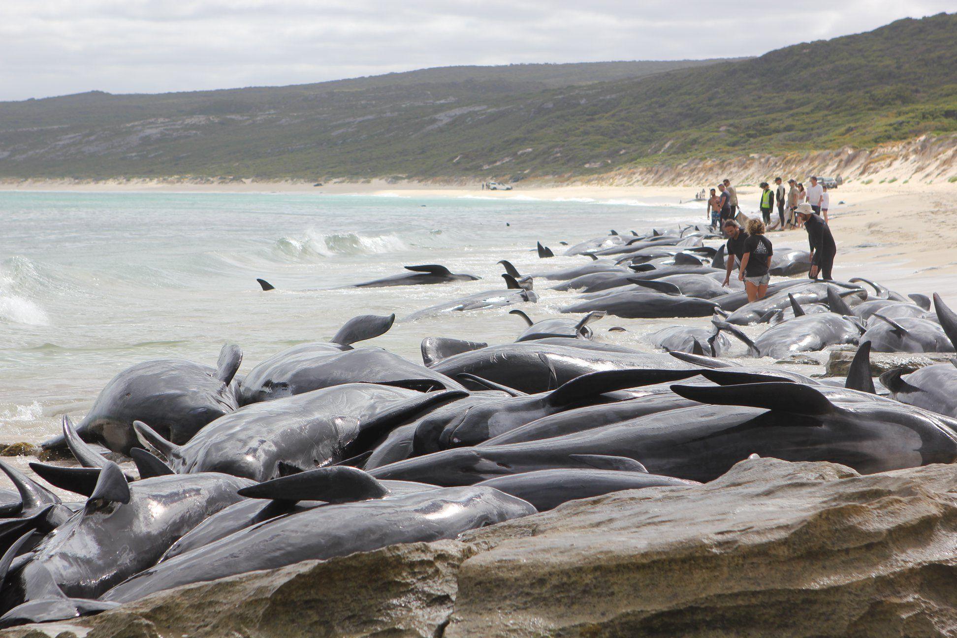 кит выбросился на берег картинка оттенок дарит
