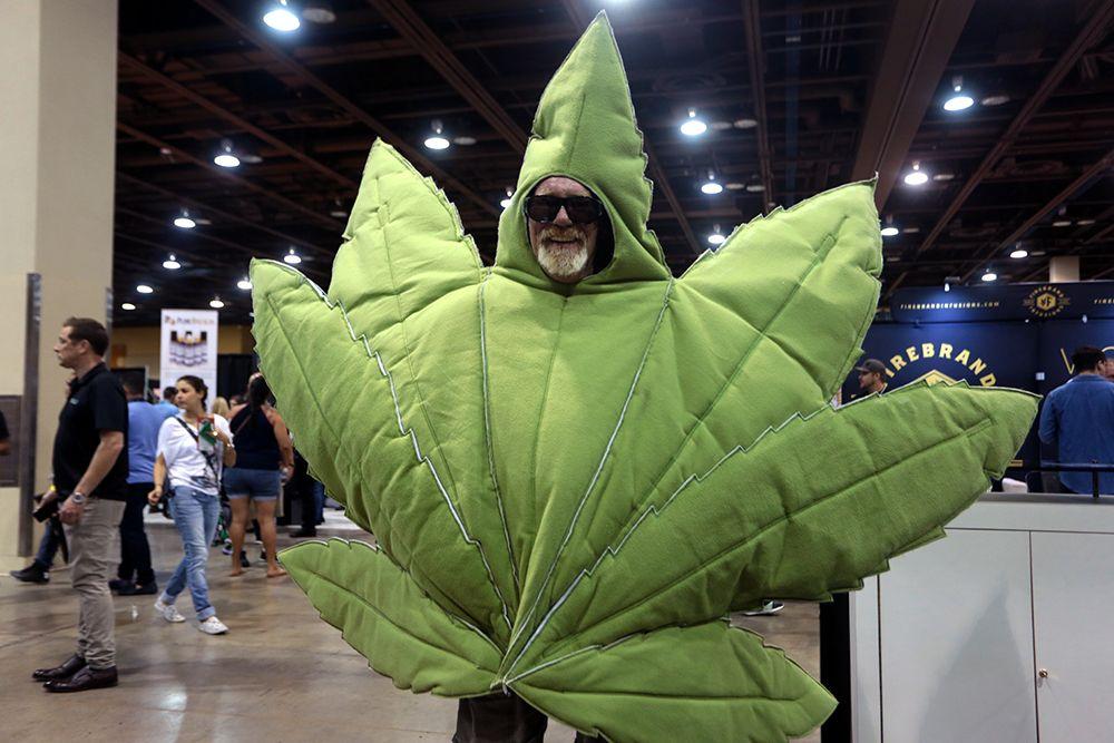 Легальная продажа марихуаны выращиваем семена марихуаны