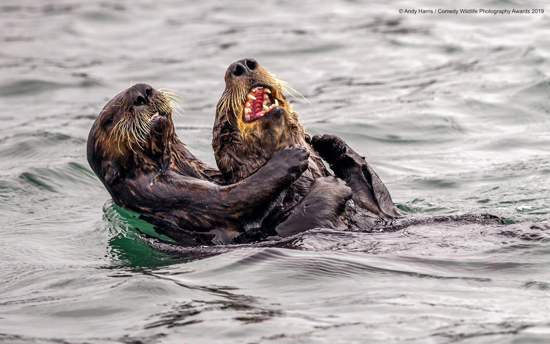 Самые смешные фото дикой природы названы 40 финалистов конкурса, спасибо всем поздравление
