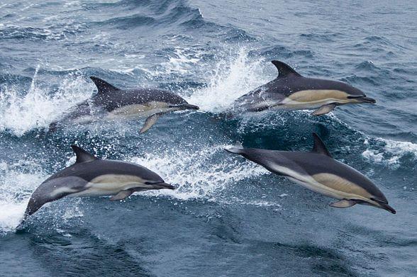 Китайская милиция ищет туриста, забравшего дельфина с берега