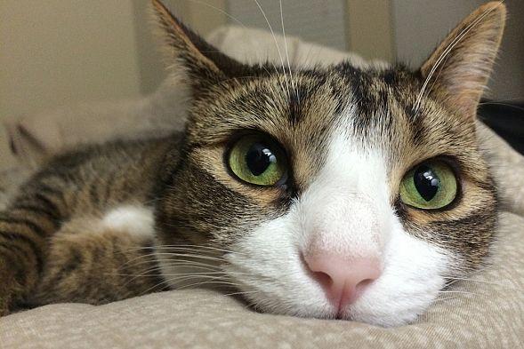 Безродный кот стал мультимиллионером после смерти хозяйки