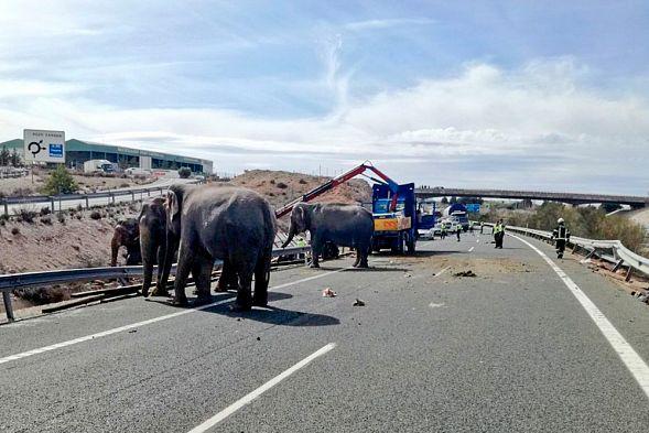 Цирковой слон стал жертвой трагедии вИспании, еще двое пострадали