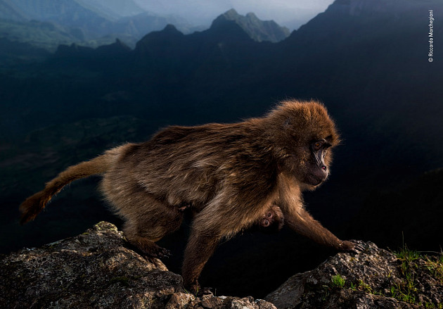 Riccardo Marchgiani / Wildlife Photographer of the Year 2019